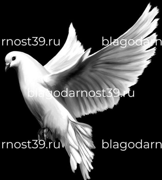 Гравировка: голубь