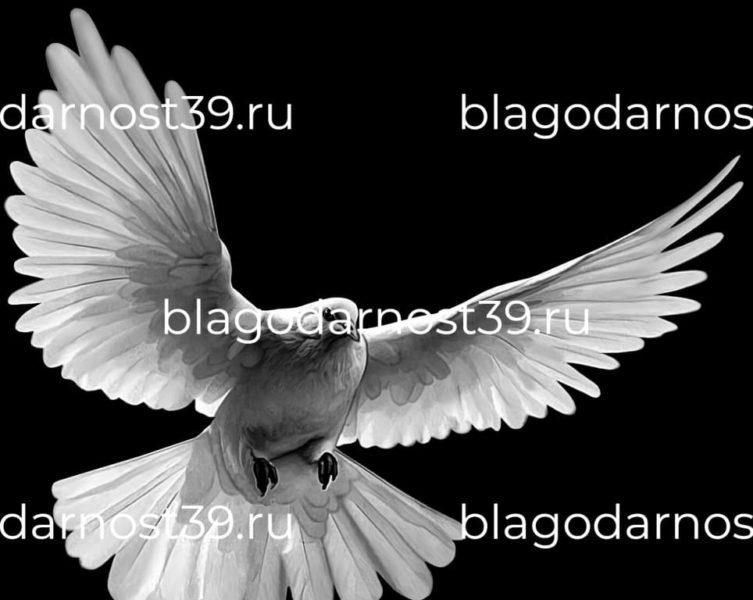 Гравировка: летящий белый голубь